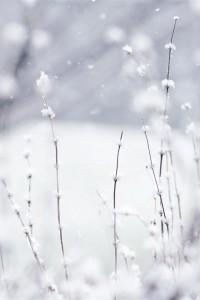 ba1aaf3b88f4b7438f903844eeb7d5d5--snow-white-winter-white