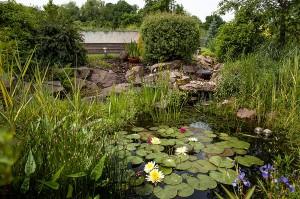 Bassin et plantes aquatiques