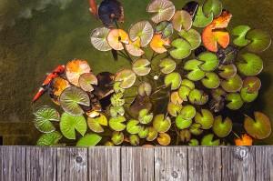 Passerelle en bois sur bassin