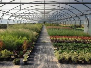 pepinière et végétaux